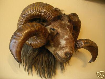 Rams Head Antiques